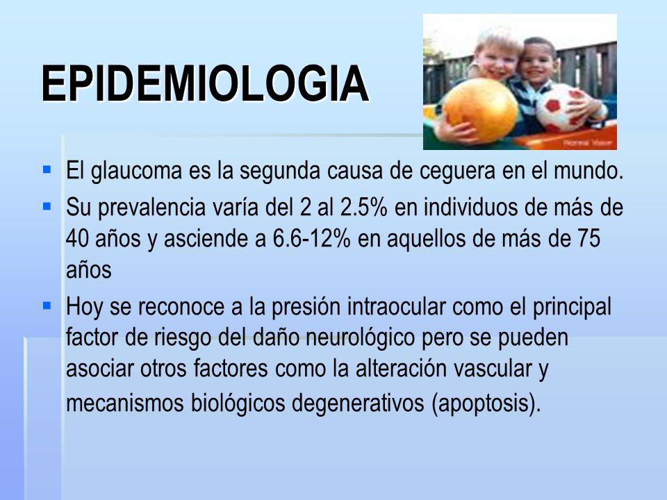 GLAUCOMA CRONICO DE ANGULO CERRADO A la gonioscopía presenta un grado variable de cierre angular.