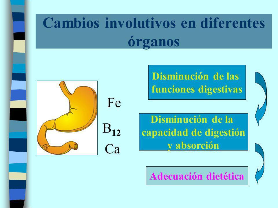 Cambios involutivos en diferentes órganos Disminución de las funciones digestivas Disminución de la capacidad de digestión y absorción Adecuación dietética Fe B 12 Ca