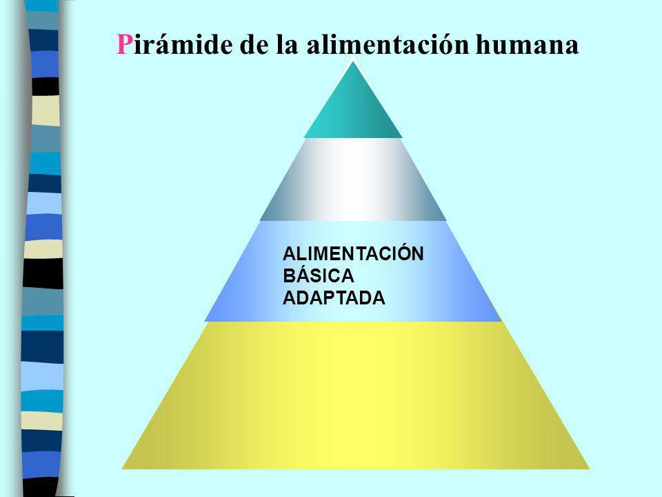 Pirámide de la alimentación humana ALIMENTACIÓN BÁSICA ADAPTADA