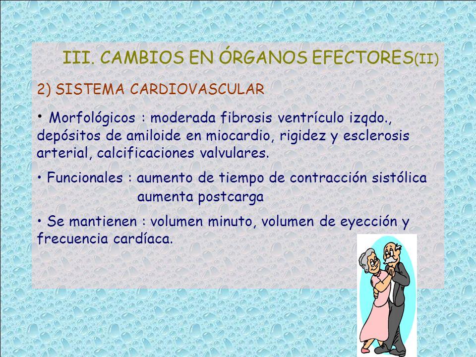 III. CAMBIOS EN ÓRGANOS EFECTORES (II) 2) SISTEMA CARDIOVASCULAR Morfológicos : moderada fibrosis ventrículo izqdo., depósitos de amiloide en miocardi