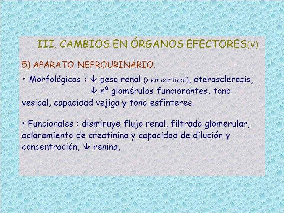 III. CAMBIOS EN ÓRGANOS EFECTORES (V) 5) APARATO NEFROURINARIO. Morfológicos : peso renal (> en cortical), aterosclerosis, nº glomérulos funcionantes,
