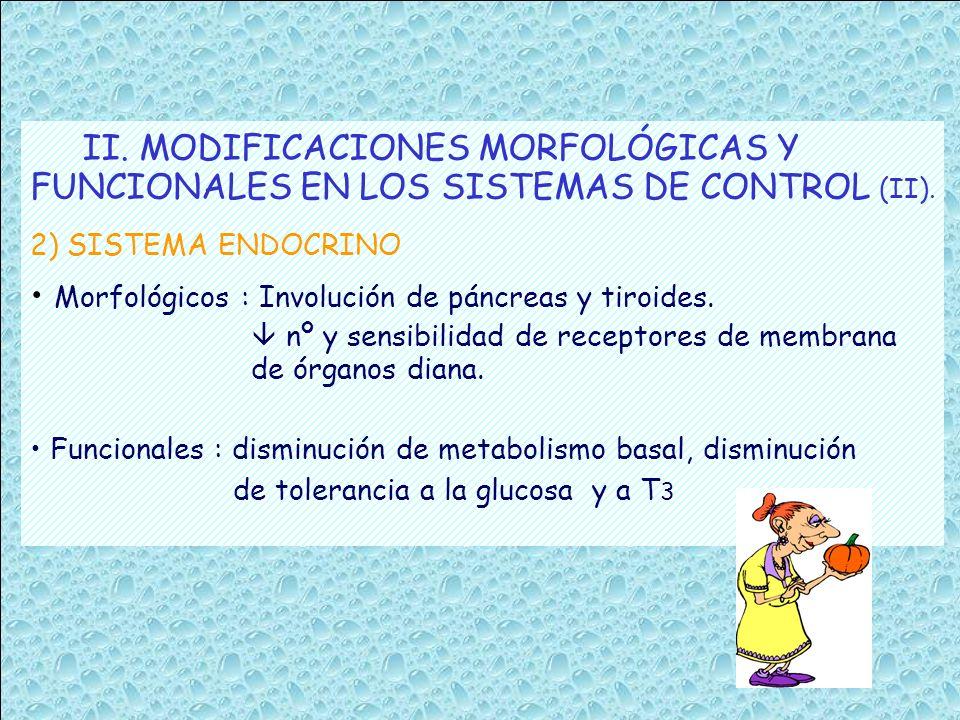 II. MODIFICACIONES MORFOLÓGICAS Y FUNCIONALES EN LOS SISTEMAS DE CONTROL (II). 2) SISTEMA ENDOCRINO Morfológicos : Involución de páncreas y tiroides.