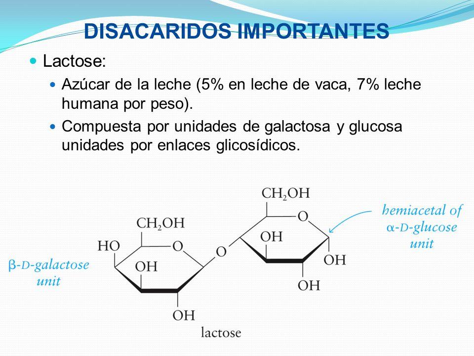DISACARIDOS IMPORTANTES Lactose: Azúcar de la leche (5% en leche de vaca, 7% leche humana por peso). Compuesta por unidades de galactosa y glucosa uni