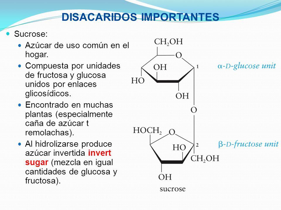 DISACARIDOS IMPORTANTES Sucrose: Azúcar de uso común en el hogar. Compuesta por unidades de fructosa y glucosa unidos por enlaces glicosídicos. Encont