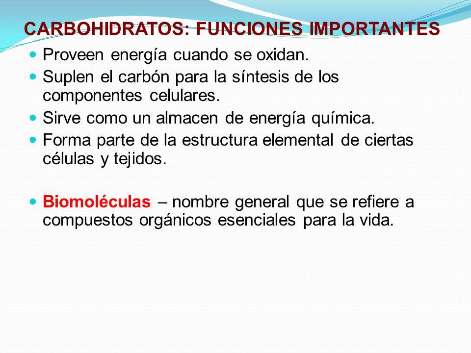 CARBOHIDRATOS: FUNCIONES IMPORTANTES Proveen energía cuando se oxidan. Suplen el carbón para la síntesis de los componentes celulares. Sirve como un a