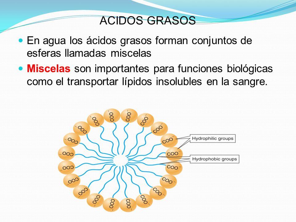 ACIDOS GRASOS En agua los ácidos grasos forman conjuntos de esferas llamadas miscelas Miscelas son importantes para funciones biológicas como el trans