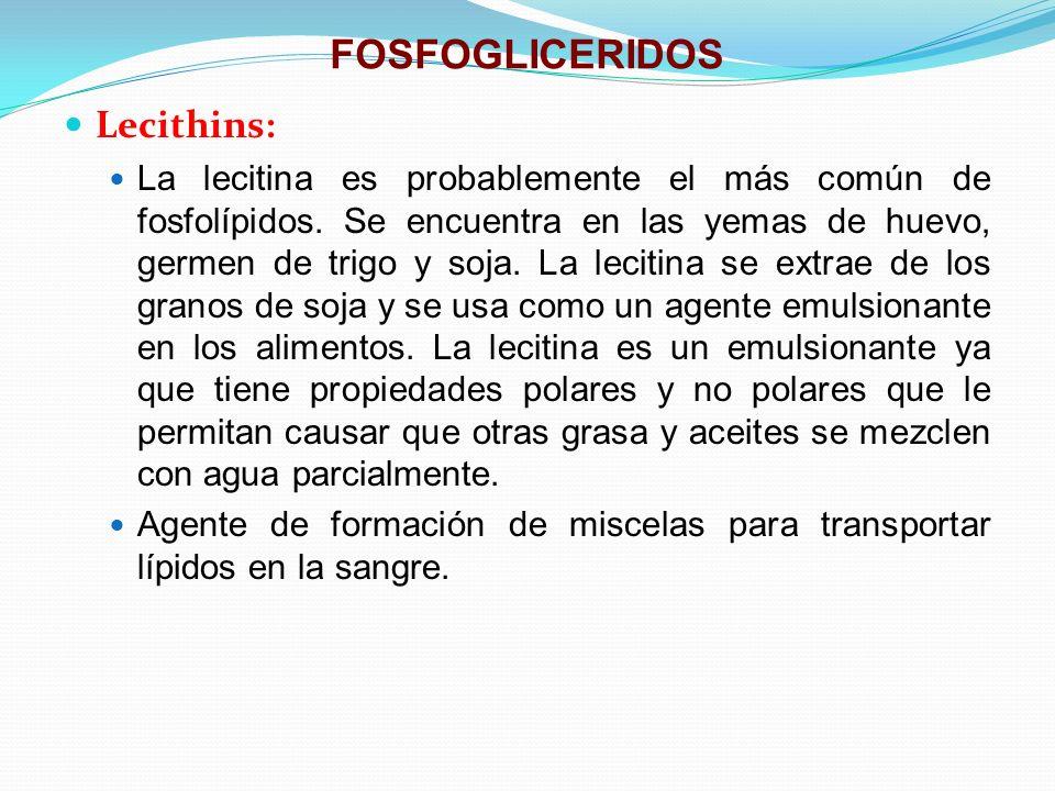 FOSFOGLICERIDOS Lecithins: La lecitina es probablemente el más común de fosfolípidos. Se encuentra en las yemas de huevo, germen de trigo y soja. La l