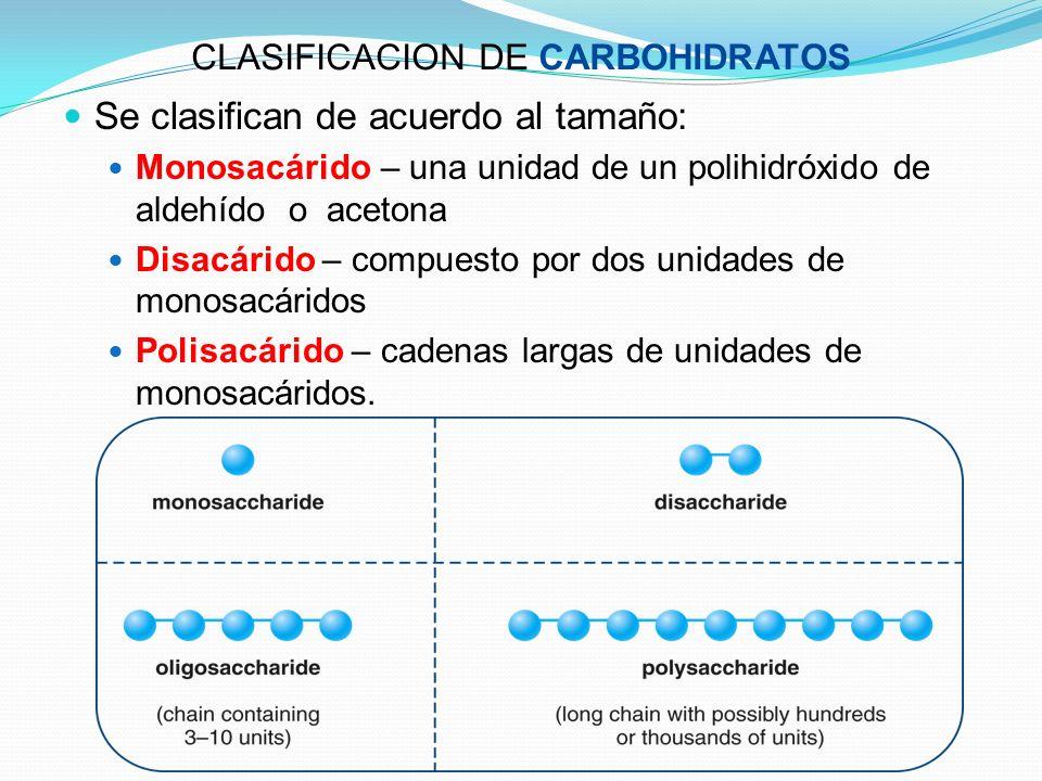 CLASIFICACION DE CARBOHIDRATOS Se clasifican de acuerdo al tamaño: Monosacárido – una unidad de un polihidróxido de aldehído o acetona Disacárido – co