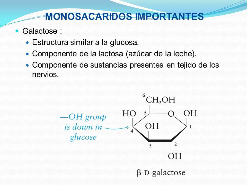Galactose : Estructura similar a la glucosa. Componente de la lactosa (azúcar de la leche). Componente de sustancias presentes en tejido de los nervio