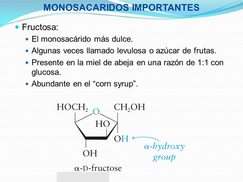 MONOSACARIDOS IMPORTANTES Fructosa: El monosacárido más dulce. Algunas veces llamado levulosa o azúcar de frutas. Presente en la miel de abeja en una