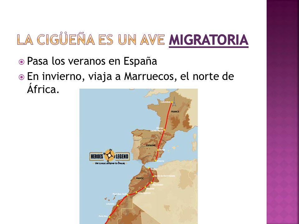 Pasa los veranos en España En invierno, viaja a Marruecos, el norte de África.