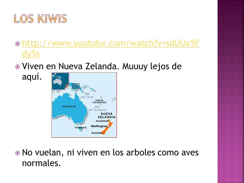 http://www.youtube.com/watch?v=sdUUx5F dySs http://www.youtube.com/watch?v=sdUUx5F dySs Viven en Nueva Zelanda. Muuuy lejos de aquí. No vuelan, ni viv