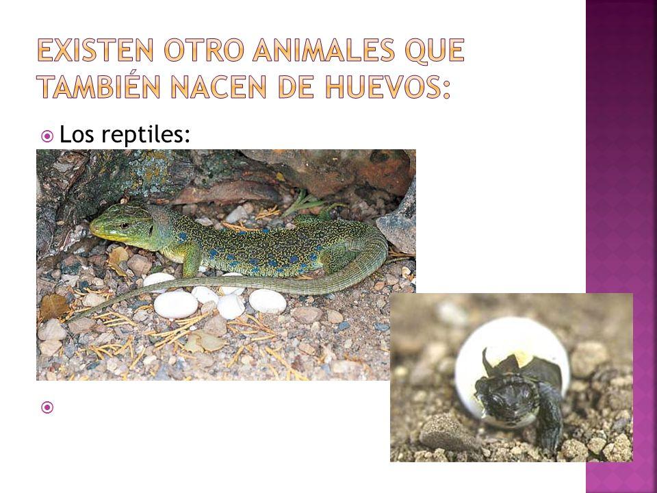 Los reptiles: