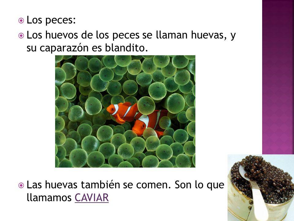 Los peces: Los huevos de los peces se llaman huevas, y su caparazón es blandito. Las huevas también se comen. Son lo que llamamos CAVIAR