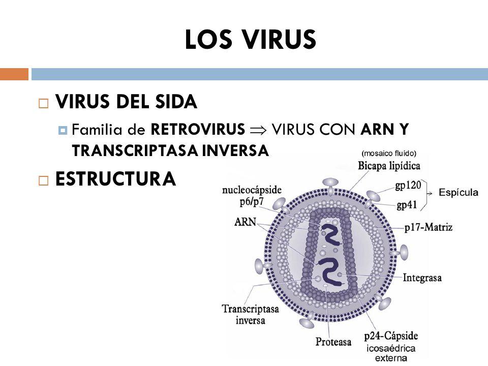 LOS VIRUS VIRUS DEL SIDA Familia de RETROVIRUS VIRUS CON ARN Y TRANSCRIPTASA INVERSA ESTRUCTURA