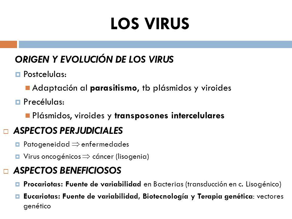 LOS VIRUS ORIGEN Y EVOLUCIÓN DE LOS VIRUS Postcelulas: Adaptación al parasitismo, tb plásmidos y viroides Precélulas: Plásmidos, viroides y transposon