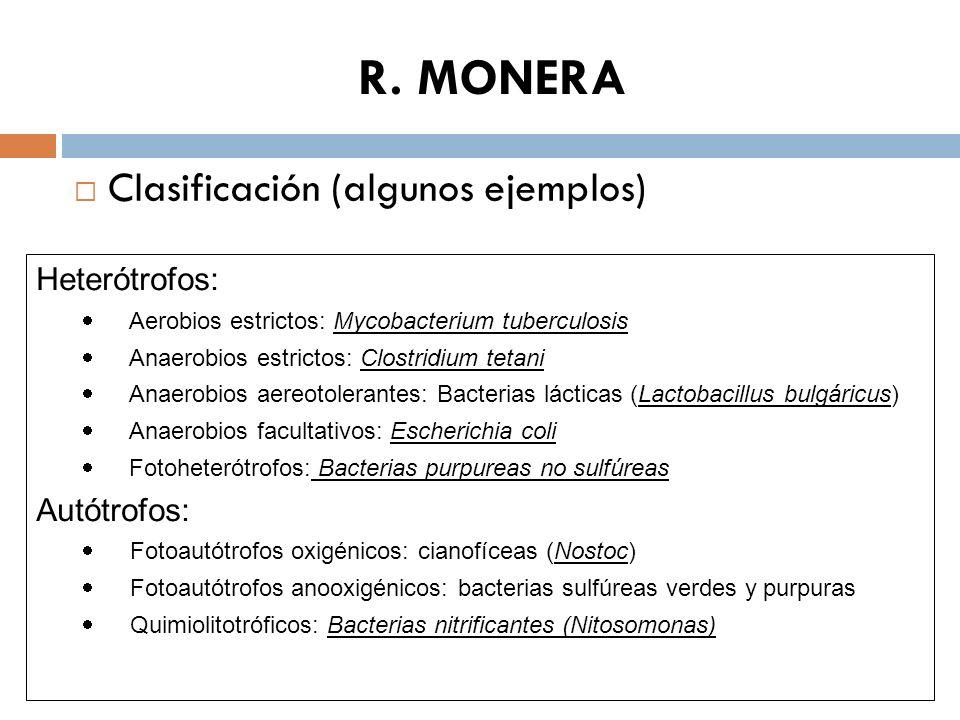 R. MONERA Clasificación (algunos ejemplos) Heterótrofos: Aerobios estrictos: Mycobacterium tuberculosis Anaerobios estrictos: Clostridium tetani Anaer