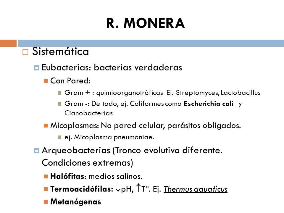 R. MONERA Sistemática Eubacterias: bacterias verdaderas Con Pared: Gram + : quimioorganotróficas Ej. Streptomyces, Lactobacillus Gram -: De todo, ej.