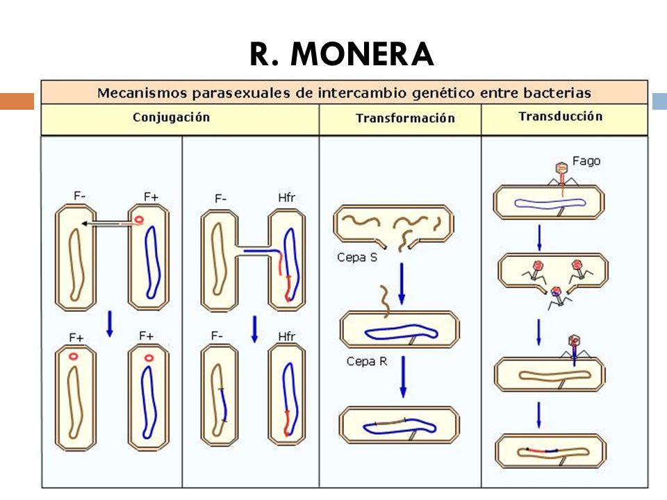 R. MONERA Fuentes de variabilidad Mutaciones Fenómenos parasexuales