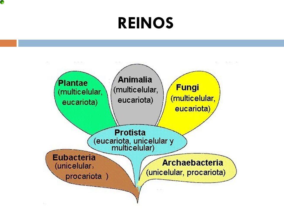 REINOS