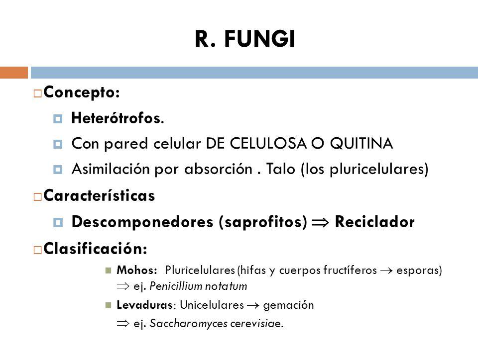 R. FUNGI Concepto: Heterótrofos. Con pared celular DE CELULOSA O QUITINA Asimilación por absorción. Talo (los pluricelulares) Características Descompo