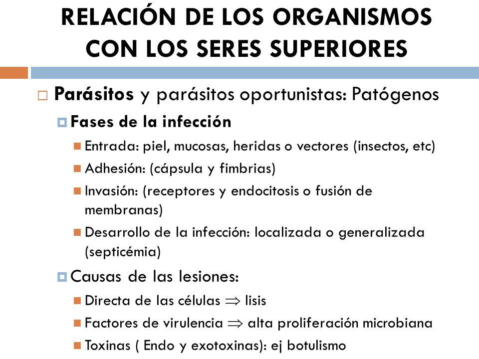 RELACIÓN DE LOS ORGANISMOS CON LOS SERES SUPERIORES Parásitos y parásitos oportunistas: Patógenos Fases de la infección Entrada: piel, mucosas, herida
