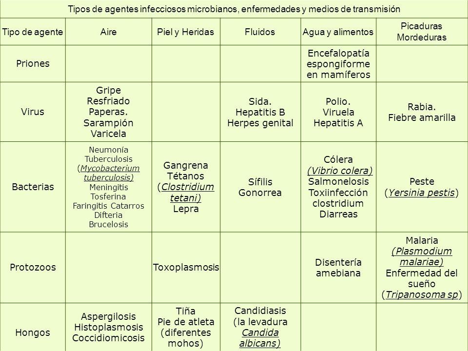 Tipos de agentes infecciosos microbianos, enfermedades y medios de transmisión Tipo de agenteAirePiel y HeridasFluidosAgua y alimentos Picaduras Morde