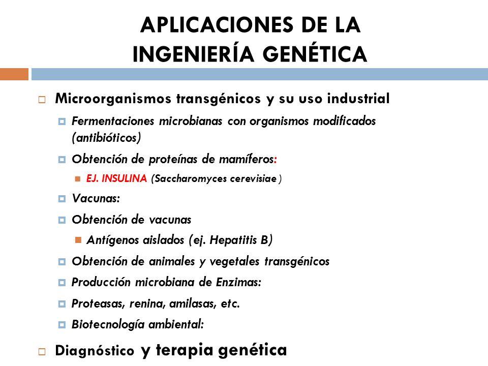 Microorganismos transgénicos y su uso industrial Fermentaciones microbianas con organismos modificados (antibióticos) Obtención de proteínas de mamífe