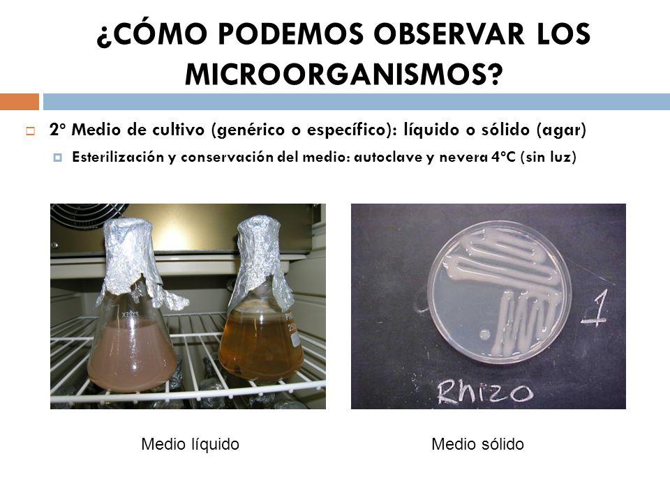 ¿CÓMO PODEMOS OBSERVAR LOS MICROORGANISMOS? 2º Medio de cultivo (genérico o específico): líquido o sólido (agar) Esterilización y conservación del med