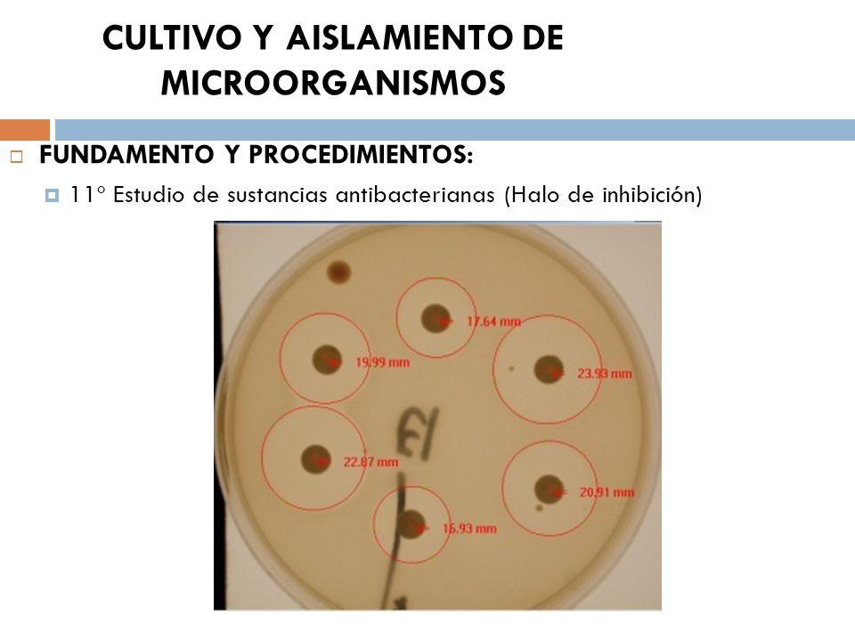 CULTIVO Y AISLAMIENTO DE MICROORGANISMOS FUNDAMENTO Y PROCEDIMIENTOS: 11º Estudio de sustancias antibacterianas (Halo de inhibición)