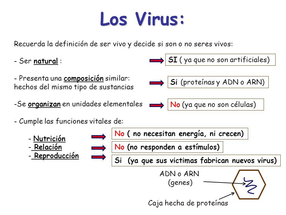 Los Virus: Recuerda la definición de ser vivo y decide si son o no seres vivos: - Ser natural : - Presenta una composición similar: hechos del mismo t