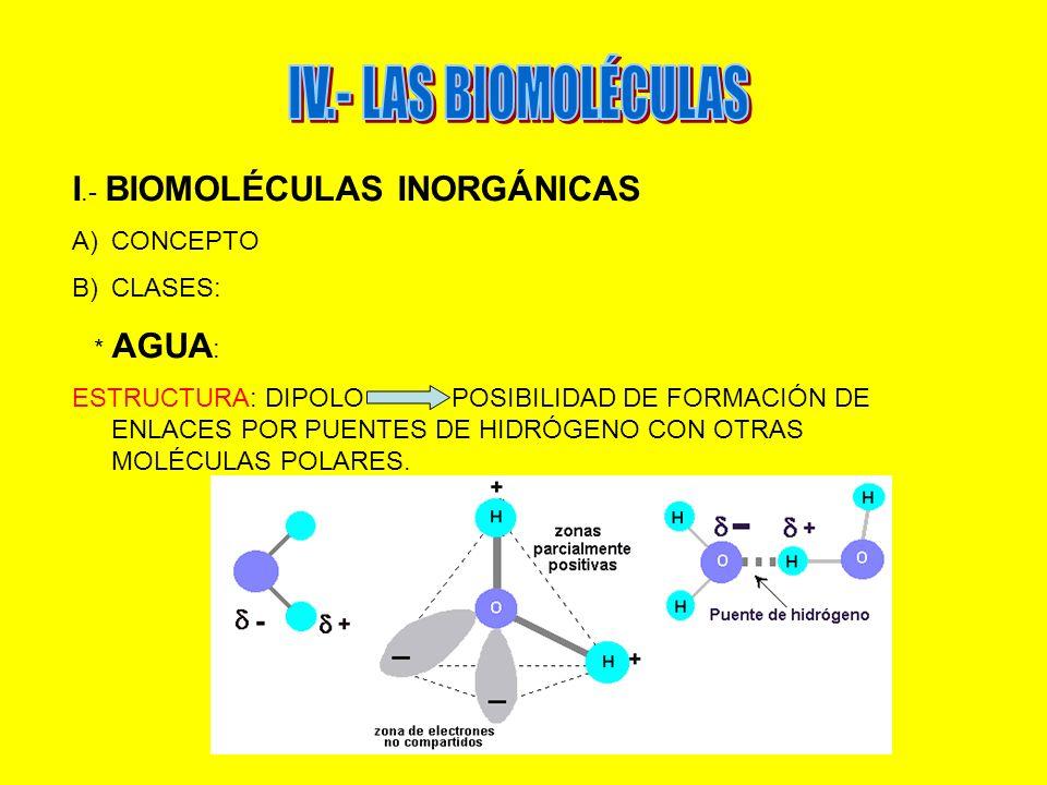 I.- BIOMOLÉCULAS INORGÁNICAS A)CONCEPTO B)CLASES: * AGUA : ESTRUCTURA: DIPOLO POSIBILIDAD DE FORMACIÓN DE ENLACES POR PUENTES DE HIDRÓGENO CON OTRAS M