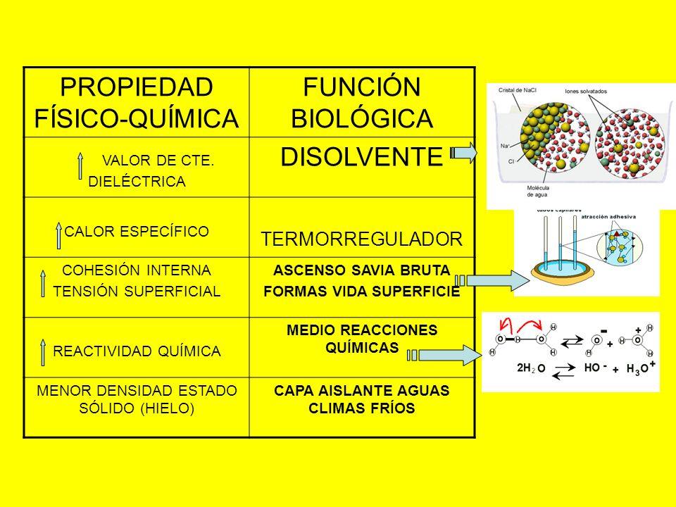 PROPIEDAD FÍSICO-QUÍMICA FUNCIÓN BIOLÓGICA VALOR DE CTE. DIELÉCTRICA DISOLVENTE CALOR ESPECÍFICO TERMORREGULADOR COHESIÓN INTERNA TENSIÓN SUPERFICIAL