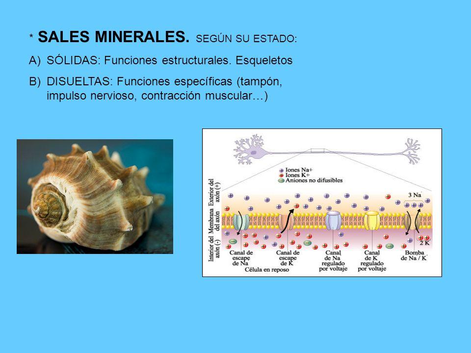* SALES MINERALES. SEGÚN SU ESTADO: A)SÓLIDAS: Funciones estructurales. Esqueletos B)DISUELTAS: Funciones específicas (tampón, impulso nervioso, contr