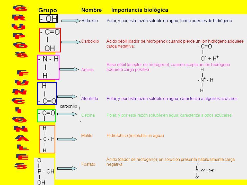 NombreImportancia biológica HidroxiloPolar, y por esta razón soluble en agua; forma puentes de hidrógeno CarboxiloÁcido débil (dador de hidrógeno); cu