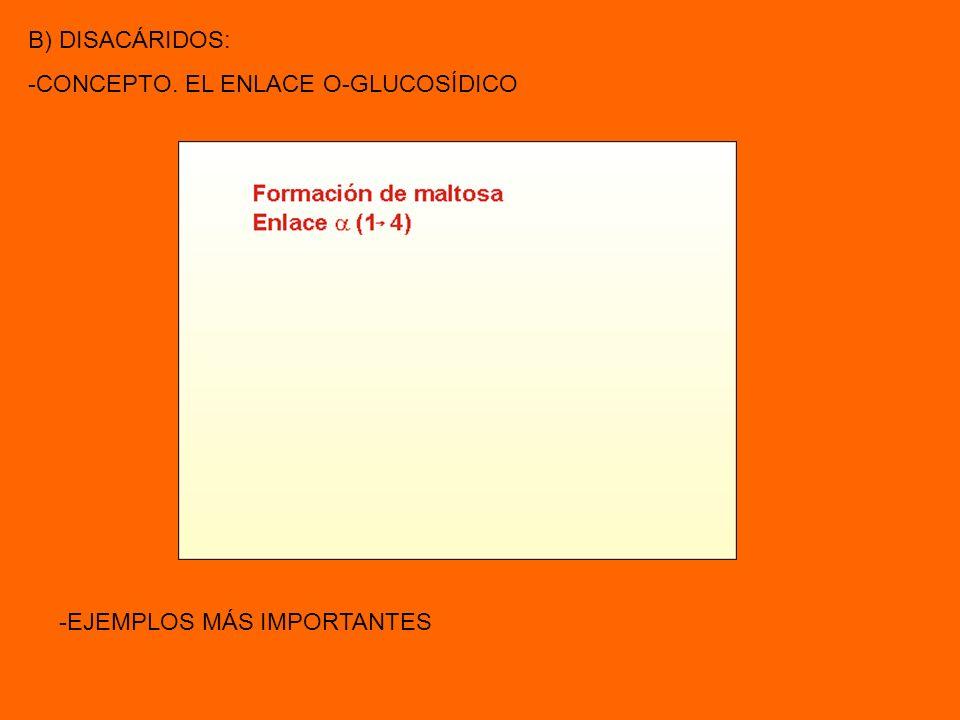 B) DISACÁRIDOS: -CONCEPTO. EL ENLACE O-GLUCOSÍDICO -EJEMPLOS MÁS IMPORTANTES