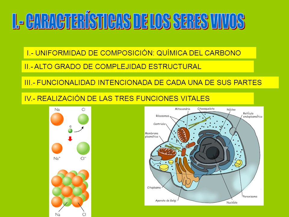 I.- UNIFORMIDAD DE COMPOSICIÓN: QUÍMICA DEL CARBONO II.- ALTO GRADO DE COMPLEJIDAD ESTRUCTURAL III.- FUNCIONALIDAD INTENCIONADA DE CADA UNA DE SUS PAR