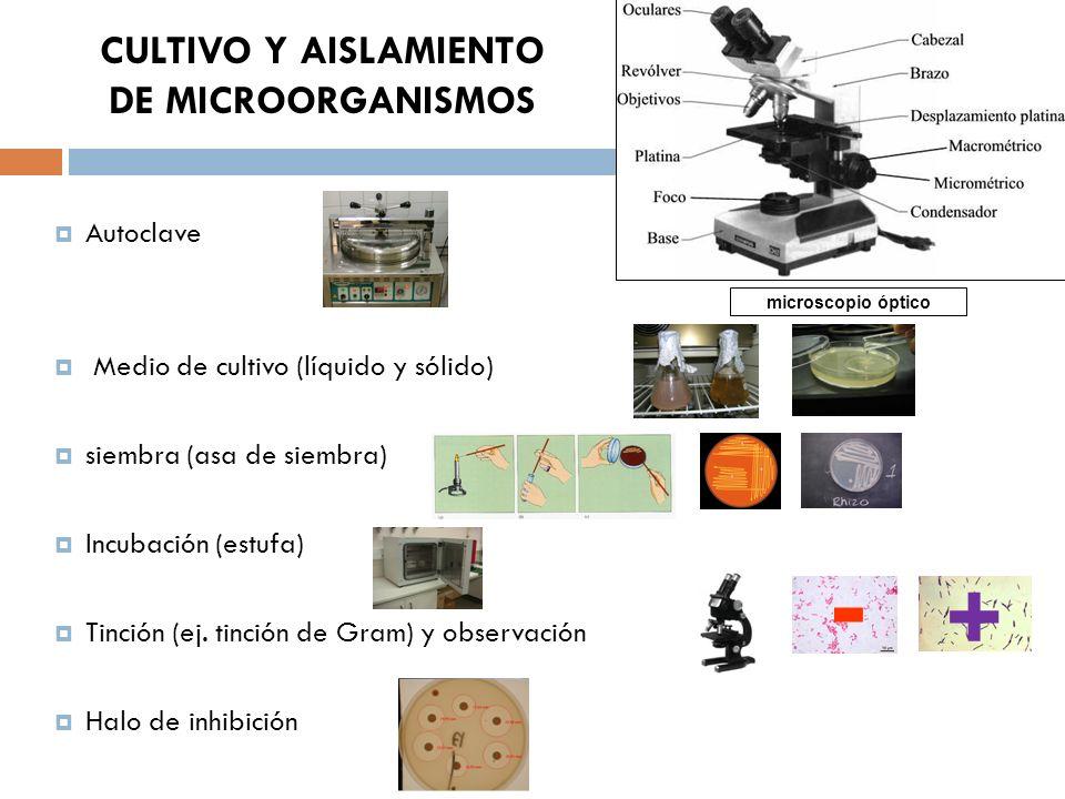 CULTIVO Y AISLAMIENTO DE MICROORGANISMOS Autoclave Medio de cultivo (líquido y sólido) siembra (asa de siembra) Incubación (estufa) Tinción (ej. tinci