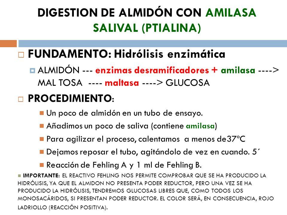 DIGESTION DE ALMIDÓN CON AMILASA SALIVAL (PTIALINA) FUNDAMENTO: Hidrólisis enzimática ALMIDÓN --- enzimas desramificadores + amilasa ----> MAL TOSA --