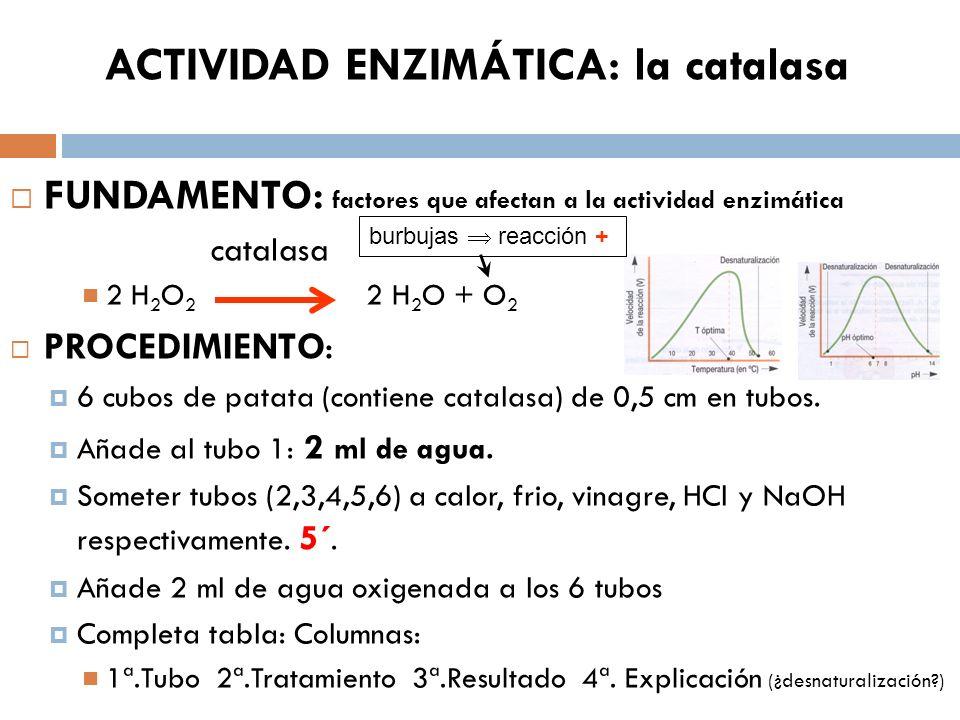 ACTIVIDAD ENZIMÁTICA: la catalasa FUNDAMENTO: factores que afectan a la actividad enzimática catalasa 2 H 2 O 2 2 H 2 O + O 2 PROCEDIMIENTO: 6 cubos d