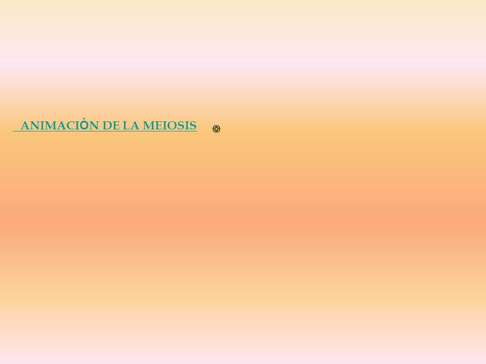 ANIMACI Ó N DE LA MEIOSIS