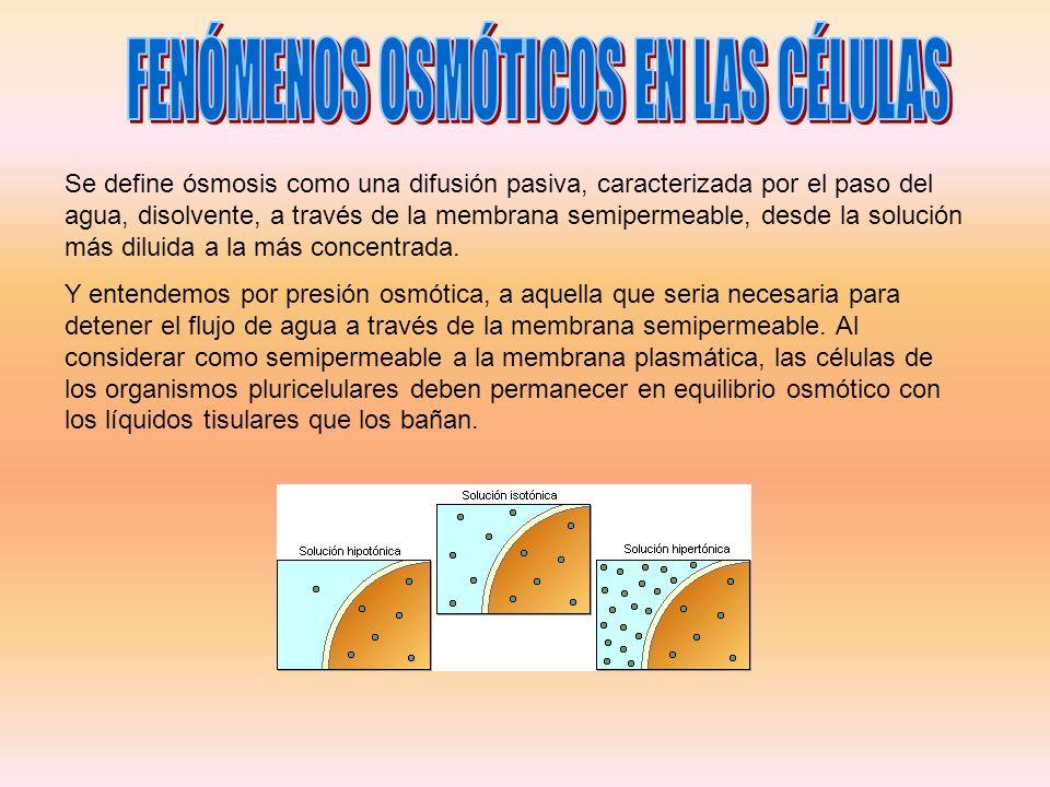 Se define ósmosis como una difusión pasiva, caracterizada por el paso del agua, disolvente, a través de la membrana semipermeable, desde la solución m