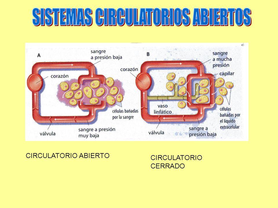 CIRCULATORIO ABIERTO CIRCULATORIO CERRADO