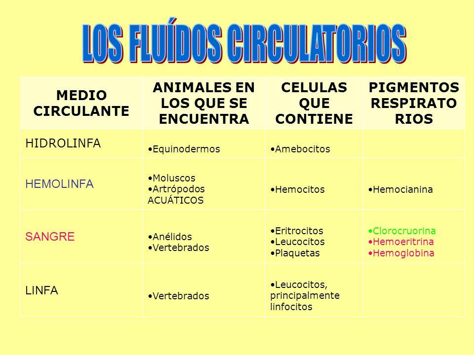 MEDIO CIRCULANTE ANIMALES EN LOS QUE SE ENCUENTRA CELULAS QUE CONTIENE PIGMENTOS RESPIRATO RIOS HIDROLINFA EquinodermosAmebocitos HEMOLINFA Moluscos Artrópodos ACUÁTICOS HemocitosHemocianina SANGRE Anélidos Vertebrados Eritrocitos Leucocitos Plaquetas Clorocruorina Hemoeritrina Hemoglobina LINFA Vertebrados Leucocitos, principalmente linfocitos
