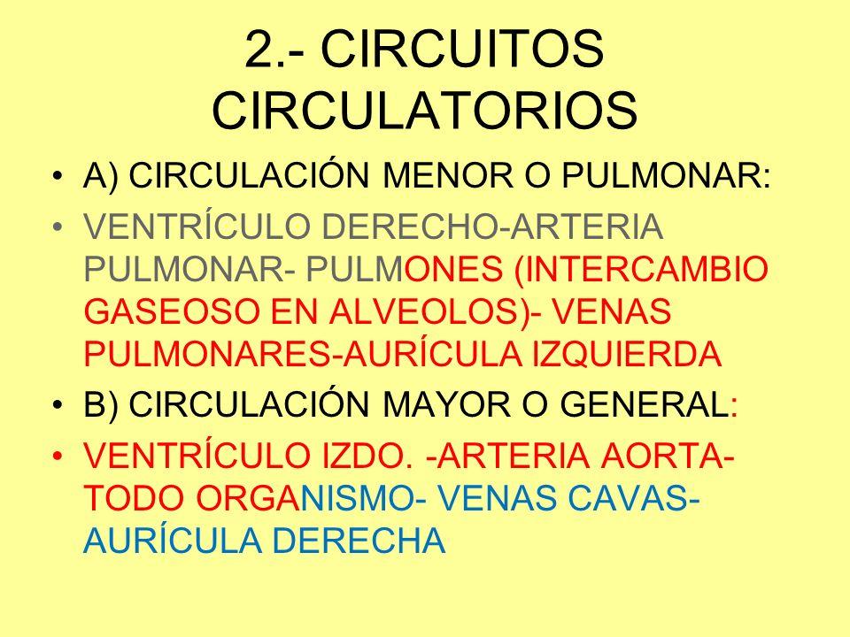 2.- CIRCUITOS CIRCULATORIOS A) CIRCULACIÓN MENOR O PULMONAR: VENTRÍCULO DERECHO-ARTERIA PULMONAR- PULMONES (INTERCAMBIO GASEOSO EN ALVEOLOS)- VENAS PULMONARES-AURÍCULA IZQUIERDA B) CIRCULACIÓN MAYOR O GENERAL: VENTRÍCULO IZDO.