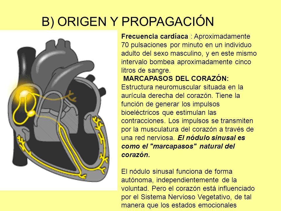 B) ORIGEN Y PROPAGACIÓN Frecuencia cardíaca : Aproximadamente 70 pulsaciones por minuto en un individuo adulto del sexo masculino, y en este mismo intervalo bombea aproximadamente cinco litros de sangre.