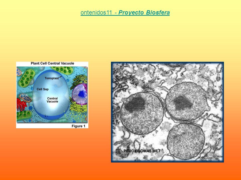 ontenidos11 - Proyecto Biosfera