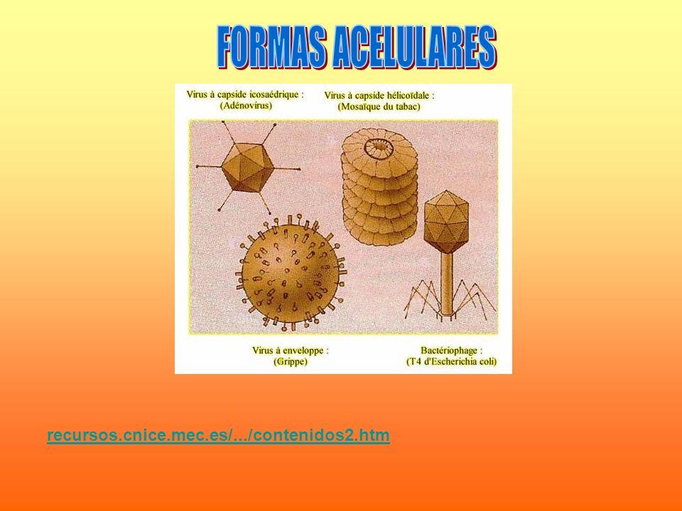recursos.cnice.mec.es/.../contenidos2.htm