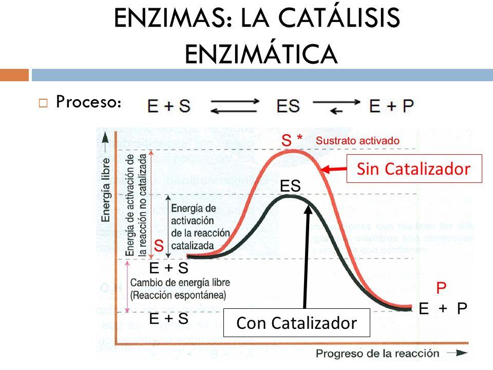 ENZIMAS: LA CATÁLISIS ENZIMÁTICA Proceso: A: Fijación especifica: complejo ES B: Liberación del producto: Enzima + Producto