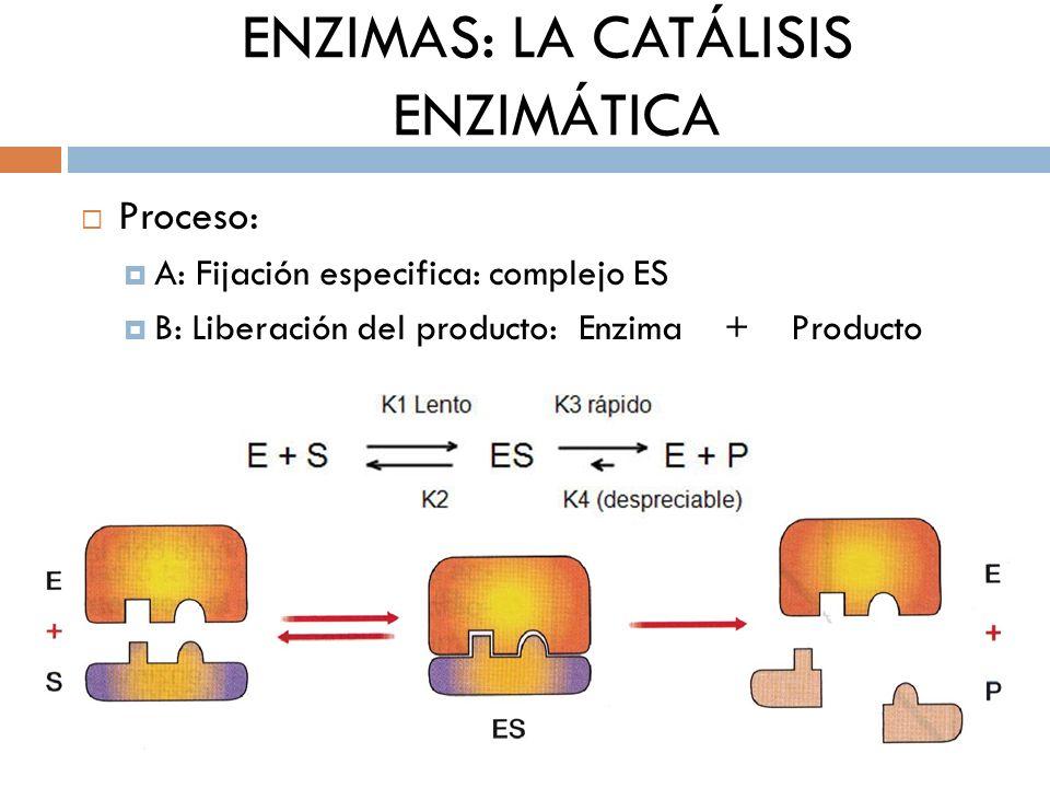 ENZIMAS: LA CATÁLISIS ENZIMÁTICA Todas las reacciones metabólicas necesitan de la participación de enzimas.